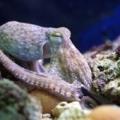 Oktopus, Clownfisch & Co: Die Helden der Meere jetzt im SEA LIFE hautnah erleben