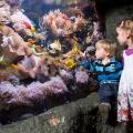 Wegen Inventur geöffnet – Fische zählen im SEA LIFE Oberhausen