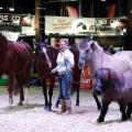 Die Pferdemesse für die ganze Familie