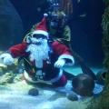 Advent, Advent - Tropische Weihnachten im SEA LIFE Oberhausen