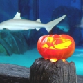 Fish in Fear - Halloween im Haifischbecken