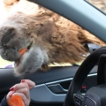 Autosafari am Niederrhein: Safariland Drive-In am Wunderland Kalkar